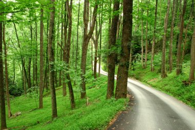 Country road through green mountain forest