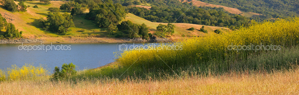 California lake and hillside in summer