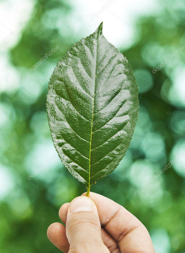 Fresh green leaf in hand over defocus summer background