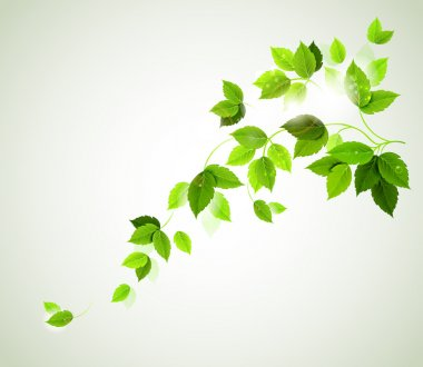 Summer branch with fresh green leaves stock vector