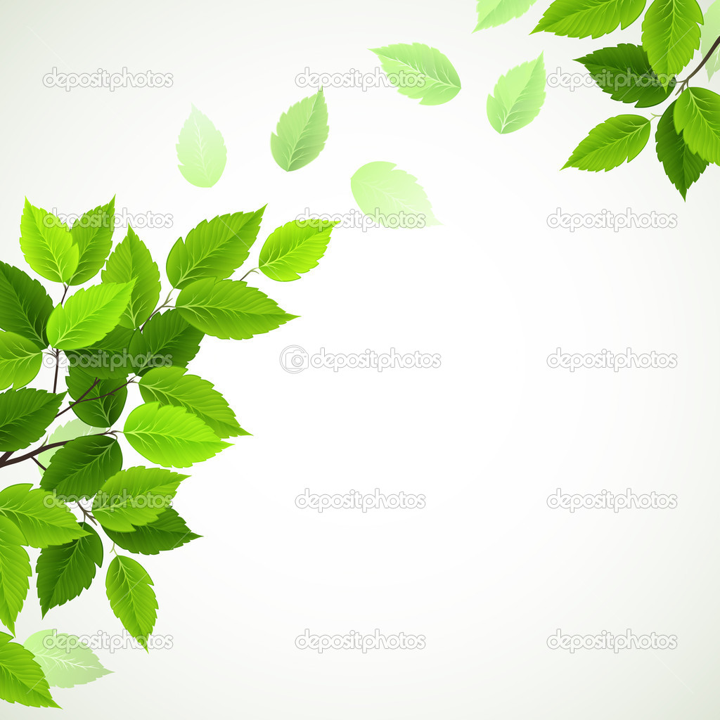 Branch with fresh green leaves