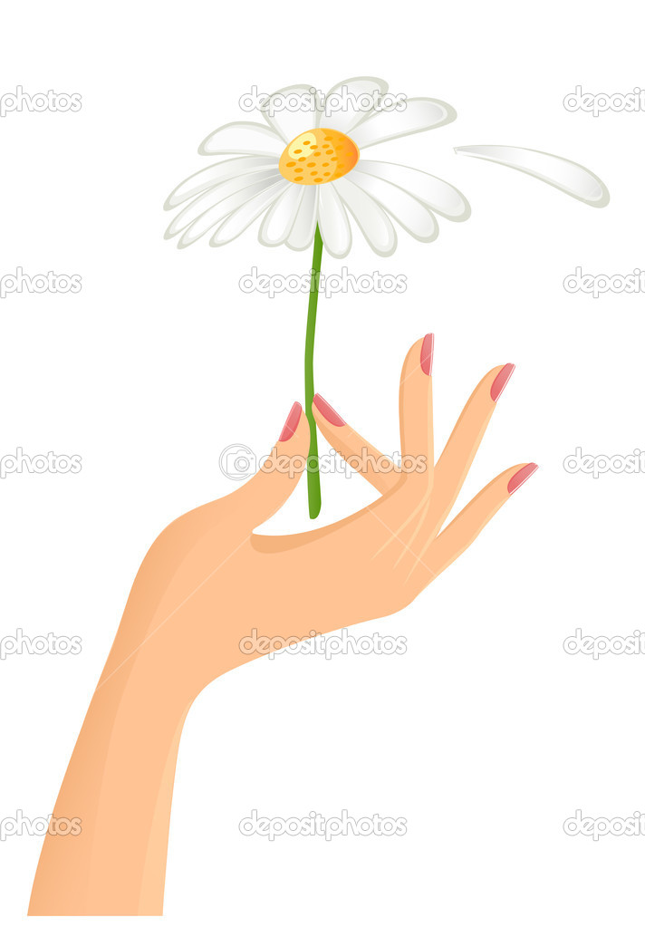 Female hand with camomile. Vector-Illustration