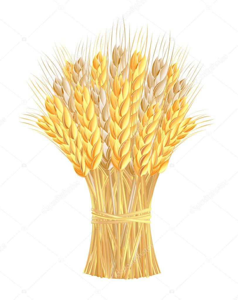 Картинка сноп пшеницы