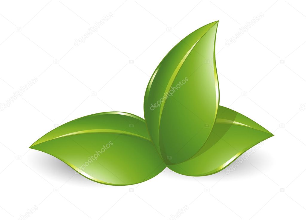 Nature design element, green leafs
