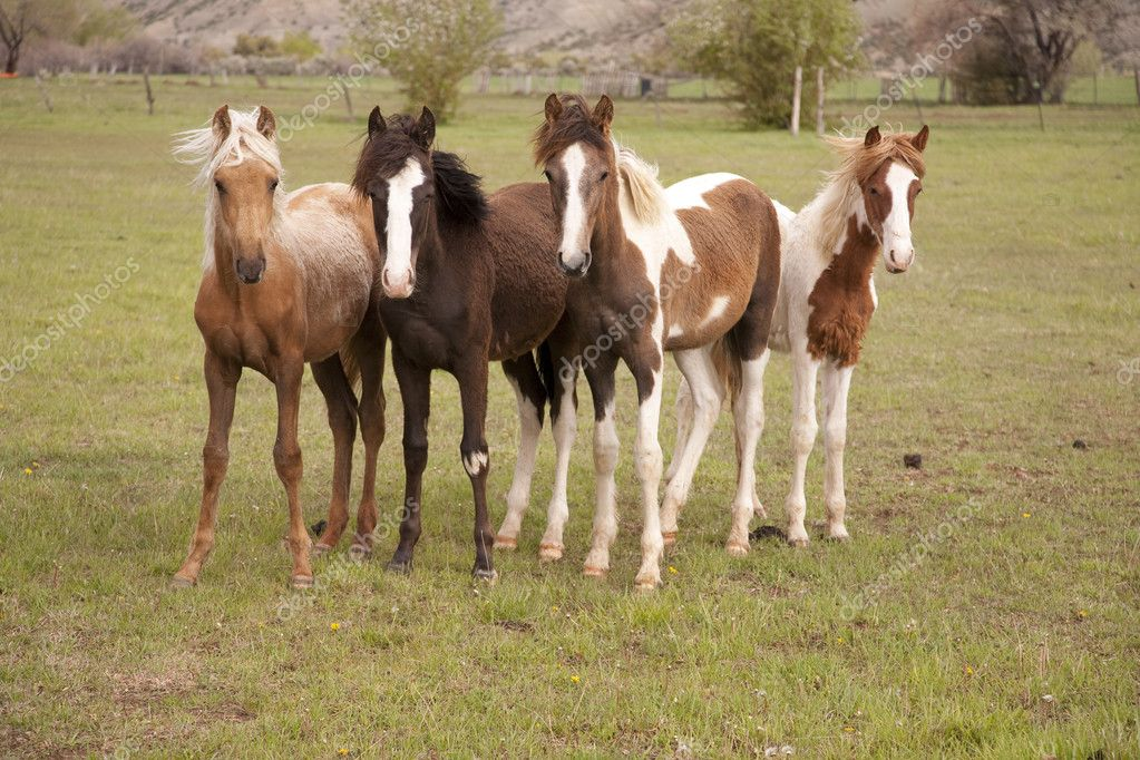 Young horses looking