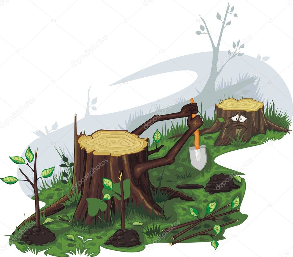 Stumps are planted saplings