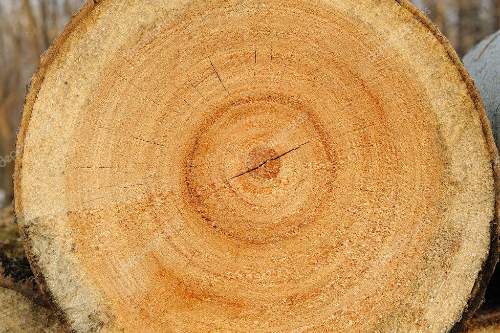 Sawn wood texture.
