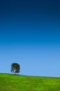 Single tree in a lovely green field blue sky stock vector