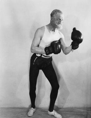 Portrait of mature boxer