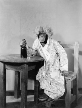 Chimpanzee dressed as woman with bottle and shot glass