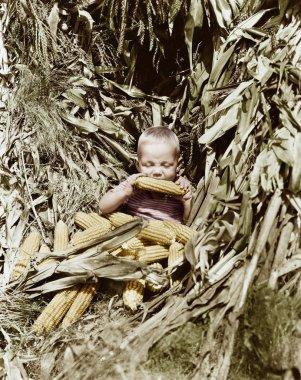 Boy eating a corn cob in a corn field