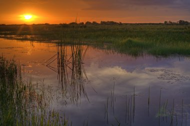 Everglades at sunset in South Florida