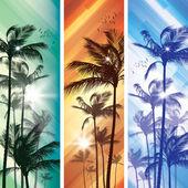 palmy v západu slunce