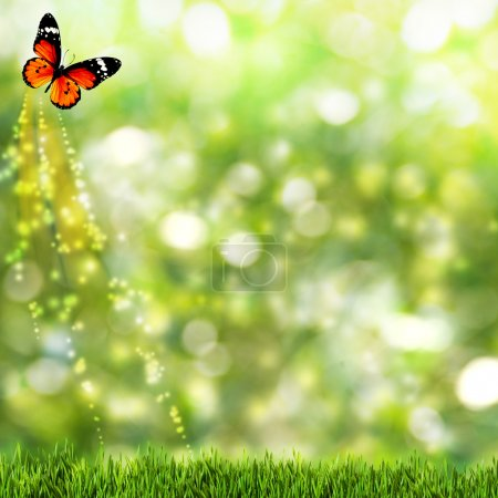 Abstract summer backgrounds with beauty butterfly
