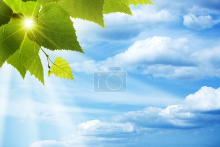 Happy morning. Abstract natural backgrounds against blue skies