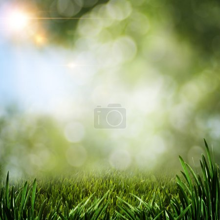 Photo for Abstract summer backgrounds with green grass and sun beam - Royalty Free Image