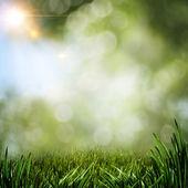 Pozadí abstraktní letní zelené trávy a Sluneční paprsek