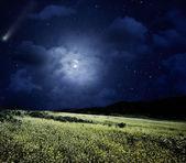 Nightly meadow.