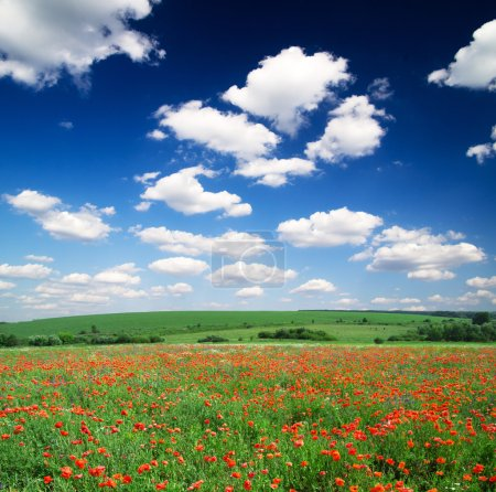 Photo for Poppy flowers against the blue sky - Royalty Free Image