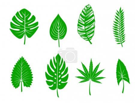 Illustration for Set of green tropical leaves. Vector illustration - Royalty Free Image