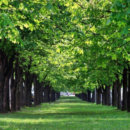 Foto de Hermoso parque - Imagen libre de derechos