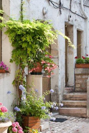 Nice yard with flowers