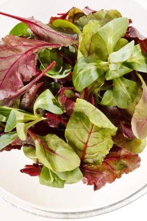 Photo pour Salade fraîche - image libre de droit