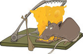 Rat cheese and a mousetrap