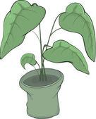 Rubber plant in a pot Cartoon