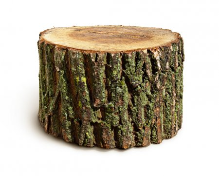 Stump isolated