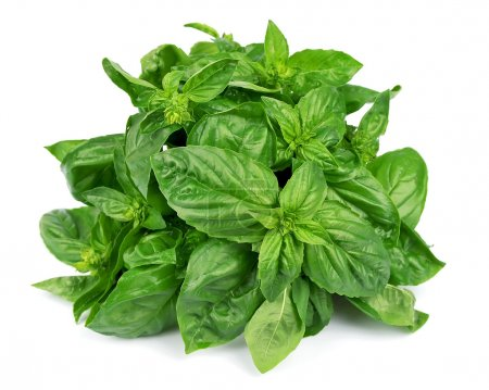 Photo for Fresh basil leaves isolated on white background - Royalty Free Image