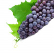 Bunch of fresh grapes isolated on white...