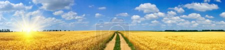 Photo for Panoramic view of golden wheat field by summertime. - Royalty Free Image