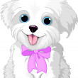 Cute white lap-dog puppy posing with pink ribbon...