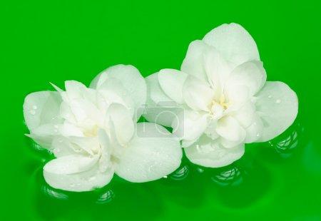 Beautiful White Jasmine Flowers on Water