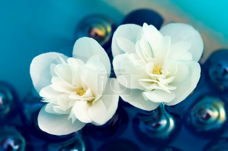 Photo for Two white jasmine flowers floating on the water with blue glass stones - Royalty Free Image
