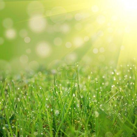 Photo pour Champ vert avec de l'eau s'affaisse au coucher du soleil - image libre de droit