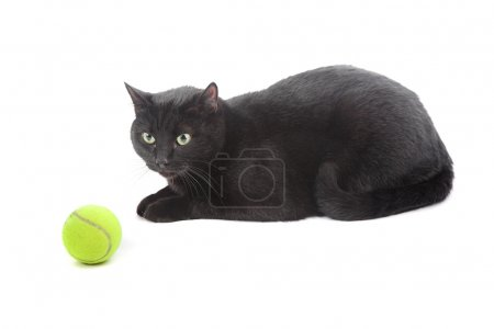 Cat with tennis ball