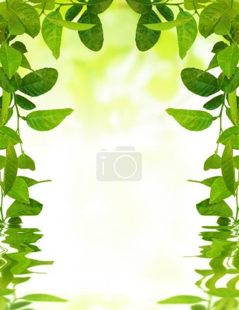 Photo for Young green leaves with water drops in spring reflected in waves - Royalty Free Image