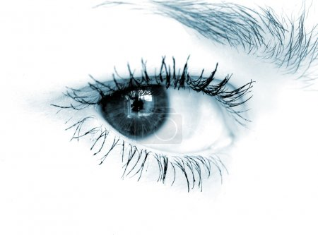 Closeup shot of blue eye on white background