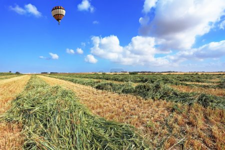 The balloon flies over a field of wheat