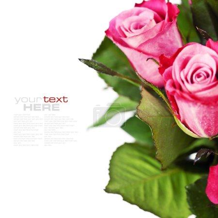 Photo pour Roses roses avec des gouttelettes d'eau sur fond blanc (avec texte amovible facile) - image libre de droit