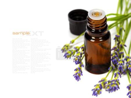 Photo pour Aromathérapie lavande (fleurs fraîches de lavande, huile essentielle) au blanc (avec texte amovible facile) - image libre de droit