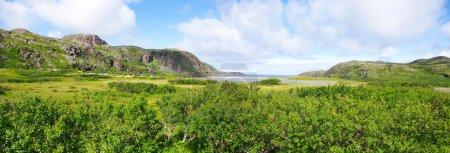 Landscape of the polar summer tundra....