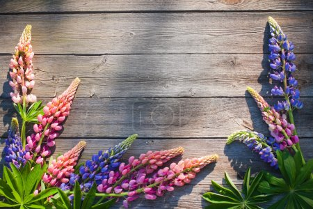 Beautiful lupines on wooden background