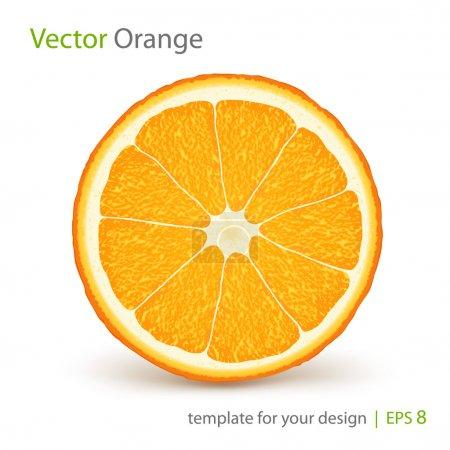 Illustration for Vector fresh ripe slice of orange on white - Royalty Free Image