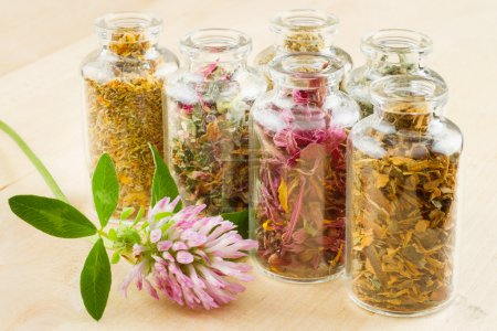 Photo for Healing herbs in glass bottles, herbal medicine - Royalty Free Image