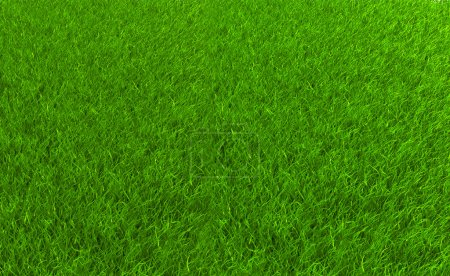 Photo for Grass field as natural background - Royalty Free Image