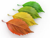 Four season. Green, red and yeloow leaf