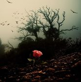 Red rose growing through soil against spooky tree